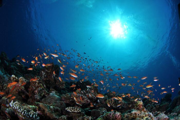 宮古島の抜群の透明度の海