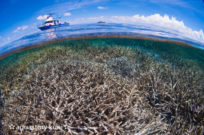 あたり一面に広がるサンゴ礁