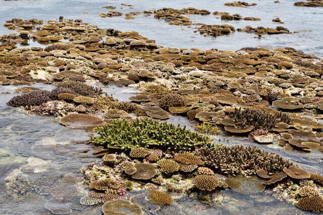 一部のサンゴ礁が海面より浮かび上がる